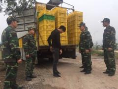 Quảng Ninh: Tiêu hủy hơn 22.000 con vịt giống không rõ nguồn gốc