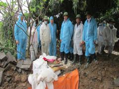 Quảng Ninh: Tiêu hủy ổ Dịch tả lợn châu Phi thứ 2 tại thị xã Đông Triều