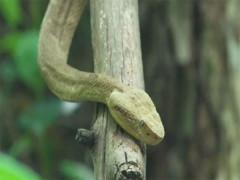 Chuyến đi thót tim của nữ du khách tới đảo rắn độc Brazil