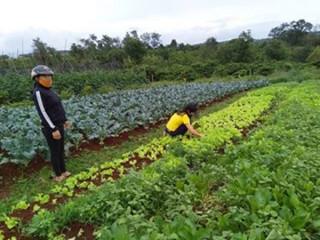 Lập nghiệp nhờ làm nông trên quê hương