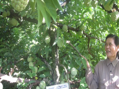 Hợp tác xã Thanh Sơn:  Liên kết nông dân đầu tư trồng cây ăn quả, tạo vùng chuyên canh hàng hóa
