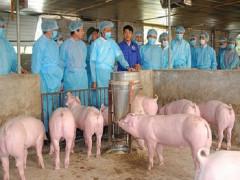 Ngăn chặn, tiến tới kiểm soát, loại bỏ bệnh dịch tả lợn Châu phi