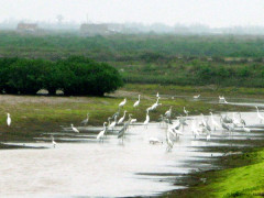 Khám phá vùng lõi khu dự trữ sinh quyển thế giới  ở cửa sông Hồng