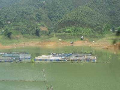Đẩy mạnh phát triển nuôi trồng thủy sản trên hồ Thác Bà và hướng tới chế biến, xuất khẩu