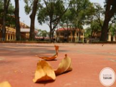 Trường THPT Văn Giang – Hưng Yên: Một ngôi nhà hạnh phúc