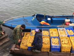 Quảng Ninh: Bắt giữ 3.200 con vịt giống nhập lậu