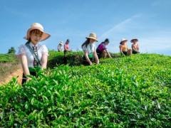 Vân Hồ gắn xây dựng nông thôn mới với hỗ trợ liên kết doanh nghiệp - nông dân