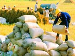 Bộ Công Thương kiến nghị cho xuất khẩu gạo trở lại