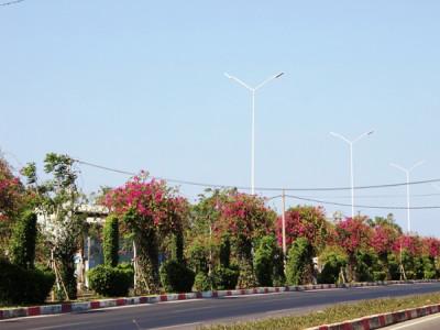 Giữa mùa Covid, Bà Rịa Vũng Tàu - Những con đường vẫn rực rỡ sắc hoa
