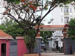 Đốn hạ hàng loạt cây phượng, phụ huynh lo ngại mảng xanh trong trường