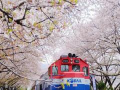 Hàn Quốc xúc tiến du lịch tại Việt Nam