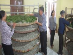 Cựu Chiến binh xã Hồng Phong chạy máy lạnh nuôi con ngo ngoe, thu nhập gấp 4 – 5 lần cấy lúa