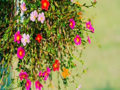 Trồng cây gì trong vườn nhà vào tháng 7 này?