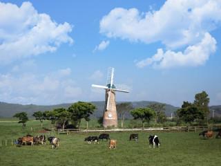Phát triển nông nghiệp bền vững: Nhìn từ hệ thống trang trại bò sữa Vinamilk