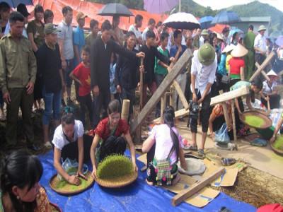 Yên Bái công nhận làng nghề trồng, sản xuất và chế biến nếp Tan Tú Lệ