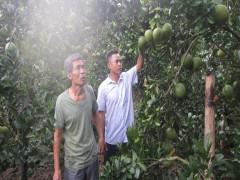 Thăm vườn cây trái thu trăm triệu mỗi năm của cựu chiến binh bản Thịnh Lang 1