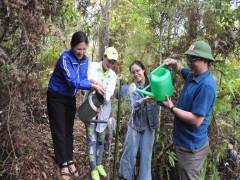 Yên Bái: Ra quân trồng tre trên sống lưng khủng long Phình Hồ