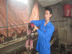Thanh niên khởi nghiệp tiêu biểu nắm bí quyết nhân tạo giống gà quý ở quận Đồ Sơn
