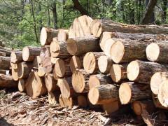 """Hội thảo """"Kiểm soát tính hợp pháp của gỗ nhiệt đới nhập khẩu"""""""
