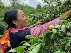 Shopee triển khai hỗ trợ xúc tiến tiêu thụ nông sản các địa phương trên sàn TMĐT