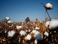 Thượng viện Mỹ thông qua dự luật cấm nhập khẩu sản phẩm từ Tân Cương