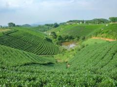 Du khách đến Thái Nguyên trải nghiệm qua những vùng chè