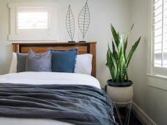 Cây lưỡi hổ để trong phòng ngủ có tốt không?